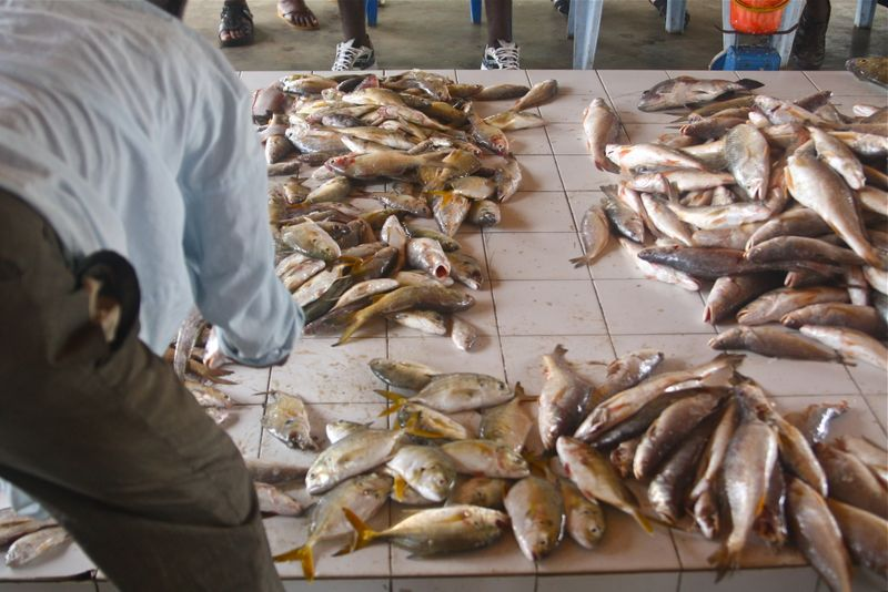 Fish at Kribi port